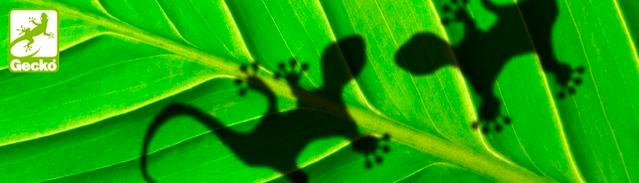 Gecko BOND TOP – серия сольвентных красок для полиолефиновых или химически обработанных PET-матераилов